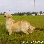 Злат 4